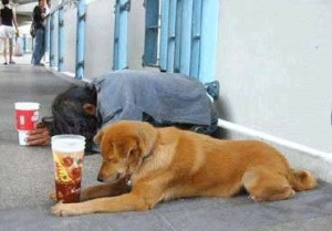 panhandling dogs